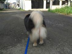 Scotty gentle walks
