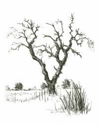 drawing trees - Google Search