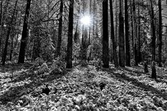 Yosemite National Park, National Parks, Fine Art Photography, Nature Photography, Framed Prints, Art Prints, Fine Art America, Instagram Images, Decor Ideas
