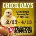 Buy your baby chicks from Tractor Supply Co.