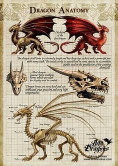 Dragon Anatomy by Anne Stokes