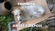 Cachorrinho Tripinha, antes e depois de ser resgatado