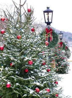 The beautiful Christmas tree. They are all so pretty, I never know which one to bring home.