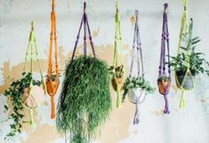 Wonderful indoor gardening ideas from the folk at geo-fleur - The Chromologist