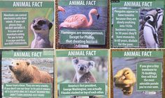 Jeff Wysaski, from California, made posters with 'facts' about flamingos, meerkats and owls and placed them in LA Zoo. The posters also claimed gibbons love soup and that bears are sneaky.