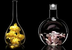 Flowers & Science by Fabien Sarazin