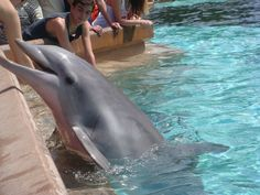 (From previous pinner)Me feeding dolphins @ SeaWorld! (Me) I've done this a long time ago, but want to go again.