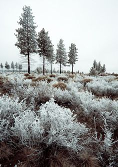 Is there anything more beautiful than a good hoar frost? I think not. via