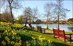 Daffodils, benches and view of Roath park lake, Cardiff in springtime Visit Cardiff, Cardiff Bay, Cardiff Wales, Springtime Pictures, Plan My Wedding, Cymru, Outdoor Furniture Sets, Outdoor Decor, South Wales