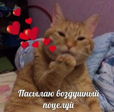 Funny Animal Memes, Cute Funny Animals, Cute Cats, Funny Cats, Funny Memes, Stupid Pictures, Meme Pictures, Hello Memes, Happy Memes