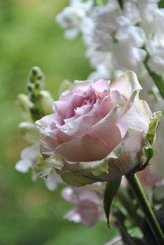 A poesia expressa nas rosas e suas tonalidades...