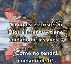 Imagenes de Aves Con Frases Sobre La Proteccion Y Cuidado De Dios Imagenes de aves con frases sobre la protección y cuidado de Dios. Esta linda imagen gif de un pájaro con Mensajes de Dios…