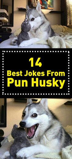 Although his jokes are so bad, you can't help it but to laugh, because he's so cute. Here are 14 of the best * cough worst cough* jokes he has ever told.