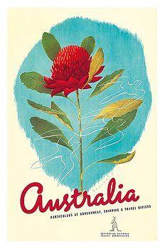 australia,waratah,telopea,flower,new south wales,nsw,state emblem,vintage, world travel poster,gert sellheim,down under,native flora,australian,vintage travel poster,retro,poster art,vintage advertising,vintage travel