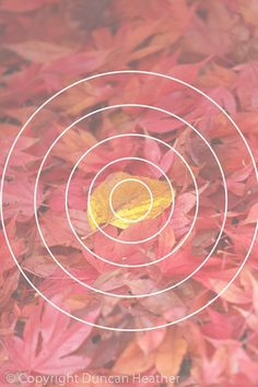 The Bull's Eye Shot (to be avoided)   The Impact of your image depends on how…