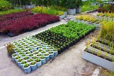 В аккуратные емкости можно высаживать большинство растений