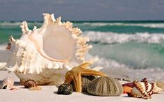 seashells--treasures from the sea.........