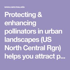 Protecting & enhancing pollinators in urban landscapes (US North Central Rgn) helps you attract pollinators and protect them from pesticides. Download full publication or click articles below to view sections of publication. Author: David Smitley, MSU Green School, Urban Landscape, Landscapes, Articles, David, Author, Paisajes, Scenery, Writers