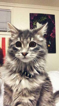 LOST CAT: 03/07/2018 - Grand Junction, Colorado, CO, United States. Ref#: L42026 - #CritterAlert #LostPet #LostCat #MissingCat