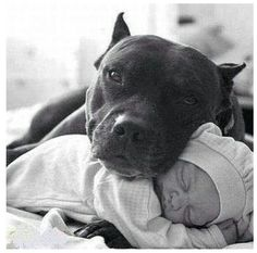 this is how all the Pit Bulls i've ever met have felt about children