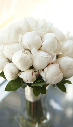 Photo: A pure white peony bouquet. Categories: Wedding Fashion Added: Tags: A,pure,white,peony,bouquet. Resolutions: Description: This photo is about A pure white peony bouquet…. Beach Flowers, My Flower, Fresh Flowers, Pretty Flowers, White Flowers, Wedding Flowers, White Tulips, Purple Wedding, Peony Flower