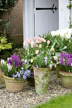 Love the green mossy look of the pots...