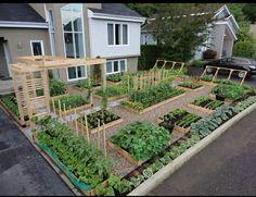 Vegie Garden idea - love it!
