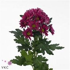 Chrysanthemum Spray Stylist - 2018 Wedding Trend: Ultra Violet Purple. For lilac and purple wedding flowers to suit your colour scheme, visit our website at www.trianglenursery.co.uk/fresh-flowers!