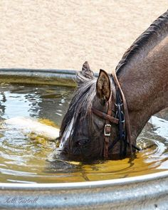Summertime swim… sort of… Lol Summertime swim… sort of… Lol - Art Of Equitation All The Pretty Horses, Beautiful Horses, Animals Beautiful, Farm Animals, Animals And Pets, Cute Animals, Horse Photos, Horse Pictures, Funny Horses