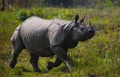 Set on the banks of River Brahmaputra, Kaziranga National Park is a famous wildlife destination. Enjoy a ride on elephant's back and view the animals from very close that will bring wonderful memories.