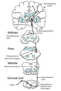 Dorsal Column-Medial Lemnisclal Pathway and Spinothalamic