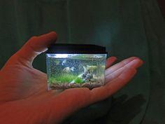 Fatima Dona. Fish tank in miniature scale