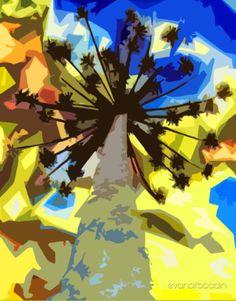 Araucárias multicolor