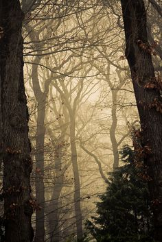 h1dd3ns4hara:  Into the woods by Alexander Ipfelkofer
