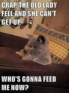 My cat one day .. All about food!! lol
