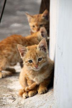 orange kitties are my favoritee