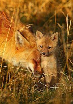 Лисенок с мамой.
