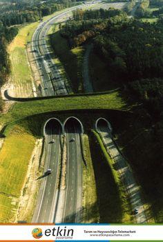 Orman sakinlerinin geçmesi için yapılmış köprü, Hollanda.