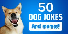 We all know that our four-legged friends make us feel good, but for an even more portable dose of fun, ... Read more50 Funny Dog Jokes and Memes to Lift Everyone's Spirits The post 50 Funny Dog Jokes and Memes to Lift Everyone's Spirits appeared first on CanineWeekly.com.