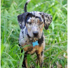 cute pup.