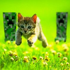 Run Kitteh They Are Gonna Splode Minecraft Here Kitty Kitty Kitty Cats