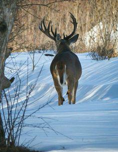 Big Deer, Big Boyz, Whitetail Bucks, Military Guns, Deer Hunting, Wall Hanger, Wild Animals, Elk, Arrows