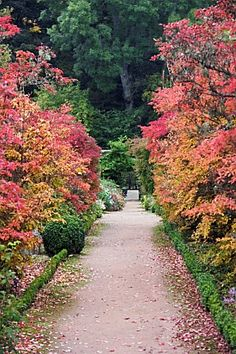 Quality Horticultural Images and Plant and Garden Photos Picture Library with over 2 Million Images! Colorful Trees, Garden Features, Garden Photos, Dream Garden, Paths, Fields, Garden Design, Pergola, Exotic