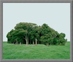 SHAUN WAUGH PHOTOGRAPHY: Landscapes Landscapes, Plants, Photography, Paisajes, Flora, Plant, Photograph, Fotografie, Scenery