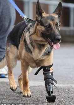 War Veteran walks proudly!