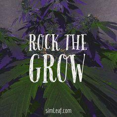 Rock The Grow