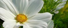 Hochsensibilität ist ein natürliches Wesensmerkmal. http://mit-viel-feingefuehl.de