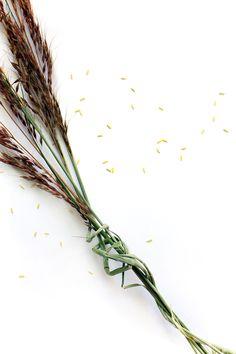indian grass (mary jo  hoffman)