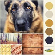 A style and color palette for your wardrobe and home inspired by the German Shepherd Scout.