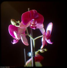 orchid by Michael Fauscette